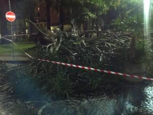 Albero crollato a Sorrento - foto A. Cascone