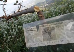 Il gelso tagliato - Foto WWF