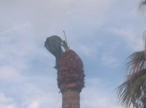 Palma rinata- Foto di A. Cascone