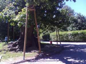 Milano: grucce per le querce