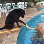 Raffaele Lauro con il suo cane Eusi
