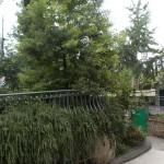 la mimosa impalcata bassa