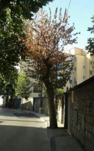 Albero via Marconi