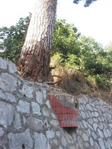 Il Pino di Via Meta Amalfi